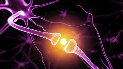 neuroscienceoflearning.jpg